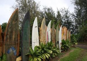 surf4 saintjude
