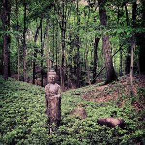 buddha4 mandrag