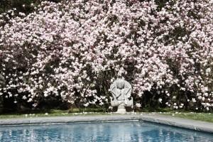 buddha101 marsilverdesign