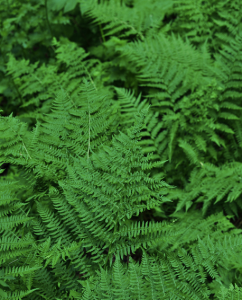 nature's green2
