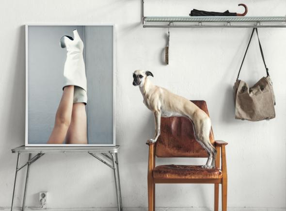 dogsm fashionsquad