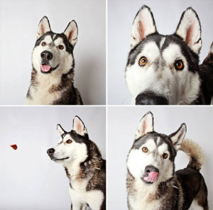 dogs pb6